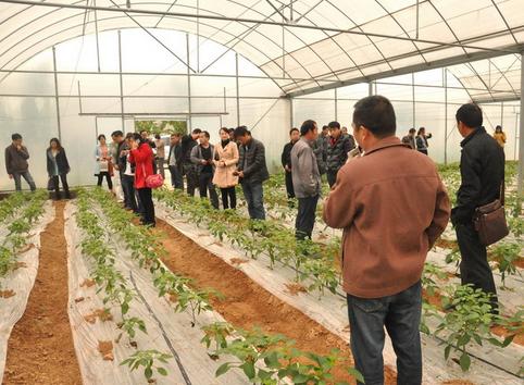 蔬菜产业成为 嘉明镇村民脱贫致富新产业
